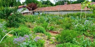 Des espaces de permaculture dans notre ville